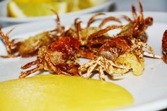 Shell crabs and lemons blurred background, close up Stock Image