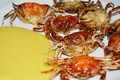 Shell crabs Royalty Free Stock Image