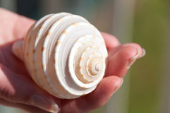 Shell cradled in hand Royalty Free Stock Photos