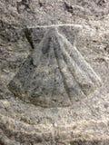 Shell crantent le symbole de la manière de St James images stock