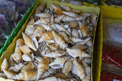 Shell Curtain Images stock