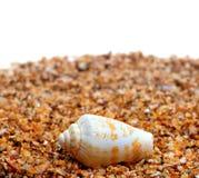 Shell d'escargot de cône sur le sable image libre de droits