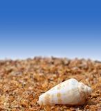 Shell d'escargot de cône sur le sable images stock