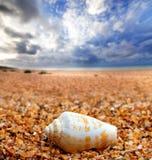 Shell d'escargot de cône sur le sable Images libres de droits