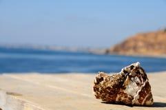 Shell dañado cerca del océano Imagenes de archivo