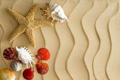 Shell da estrela do mar e do mar na areia ondulada da praia fotografia de stock royalty free