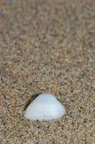 Shell da lavagem bivalve acima na costa imagem de stock