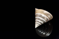 Shell da madrepérola no preto fotografia de stock