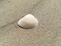 Shell dans le sable sur la plage photo libre de droits