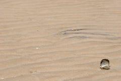 Shell, das auf einen desserted Strand legt Stockfotografie