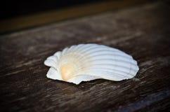 Shell de concha de peregrino Fotos de archivo libres de regalías