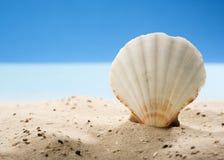 Shell de concha de peregrino en arena en la playa Imagen de archivo