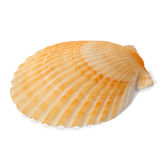 Shell de l'océan pacifique photo libre de droits