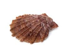Shell de l'océan pacifique photos stock