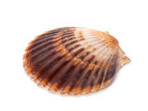 Shell de l'océan pacifique image libre de droits