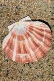 Shell de la arena y del mar fotos de archivo libres de regalías
