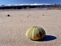 Shell de la calabaza Fotos de archivo libres de regalías