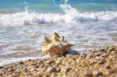 Shell de la concha Imagen de archivo libre de regalías