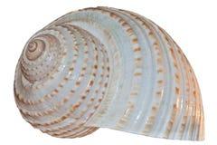 Shell de la concha aislado en el fondo blanco fotografía de archivo libre de regalías