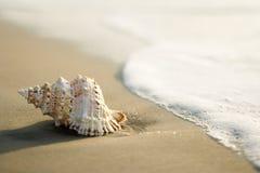 Shell de la concha en la playa Foto de archivo libre de regalías