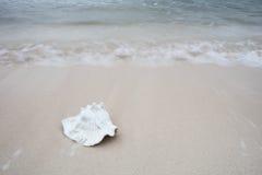 Shell de la concha en la playa Foto de archivo