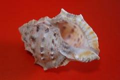 Shell de la mer chaude photo stock
