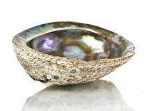 Shell de la perla aislado Imagen de archivo libre de regalías