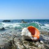 Shell de la salmuera Imagenes de archivo