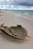 Shell de la tortuga Imagen de archivo libre de regalías