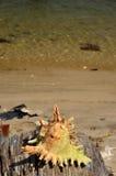Shell de madeira velhos no mar imagens de stock