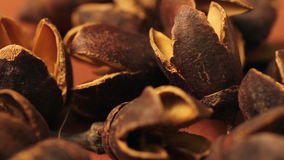 Shell-de noten sluiten omhoog stock video