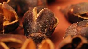 Shell-de noten sluiten omhoog stock footage