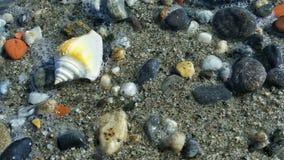 Shell in de oever dichtbij het overzees Royalty-vrije Stock Afbeelding
