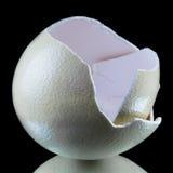 Shell de ovo da avestruz no fundo preto Imagens de Stock Royalty Free