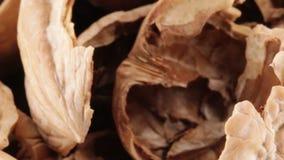 Shell de porcas de noz-pecã secadas filme