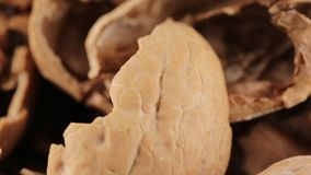 Shell de porcas de noz-pecã secadas video estoque