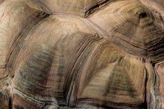 Shell de uma tartaruga gigante dos pagos do ¡ de Galà (duncanensis de Chelonoidis) Imagem de Stock