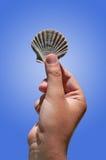 Shell de uma vieira Fotos de Stock Royalty Free