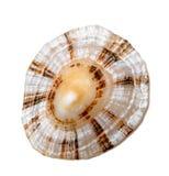 Shell de ventouse vraie photos libres de droits