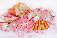Shell decor Royalty Free Stock Photography