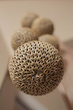 Shell decorated interior balls Royalty Free Stock Image