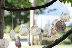 Shell-Dekoration, die vom Baum hängt. Stockfotos