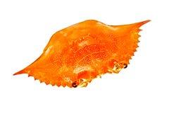 Shell del cangrejo Imágenes de archivo libres de regalías