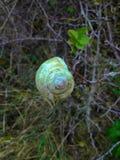 Shell del caracol Imagen de archivo libre de regalías