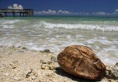 Shell del coco Imagenes de archivo