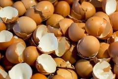 Shell del huevos, fondo de cáscara de huevos Foto de archivo