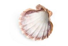 Shell del mar Foto de archivo