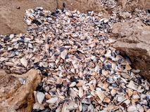 Shell del mar Imagen de archivo libre de regalías