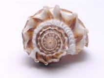 Shell del mar - 3 imagen de archivo