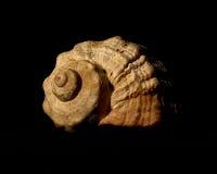 Shell del mar Foto de archivo libre de regalías